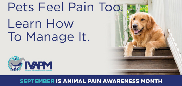 The International Veterinary Academy of Pain Management is excited to celebrate Animal Pain Awareness Month