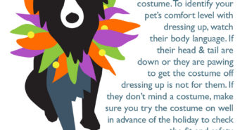 fear free halloween pet costume costumes