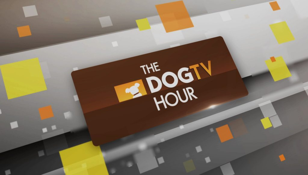 dogtv hour animal planet
