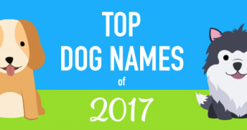 top dog names 2017