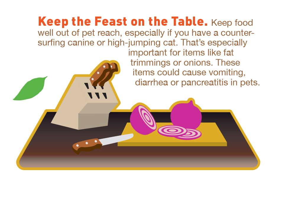 thanksgiving food goodnewsforpets