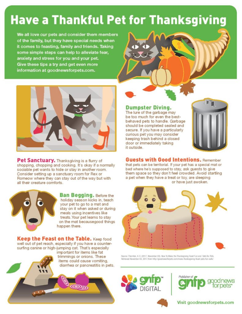 Thankgiving pets pet safety