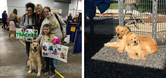 National Dog Show Will Serve Up a Golden Family Feel for Holidays