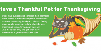 thanksgiving pet safety goodnewsforpets