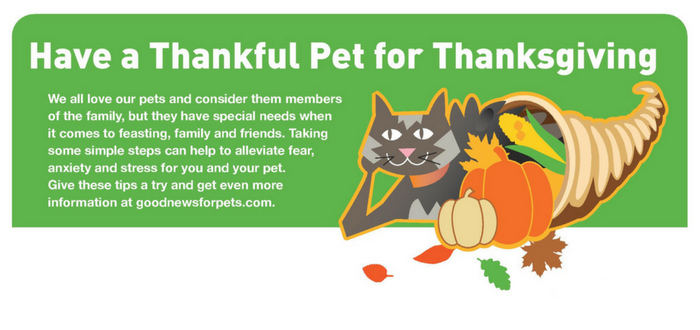 How To Make the Thanksgiving Feast Fun and Safe for Pets
