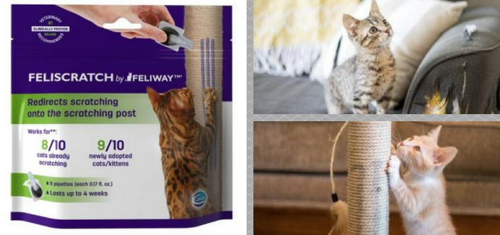 New product will have cats scratching in the proper place