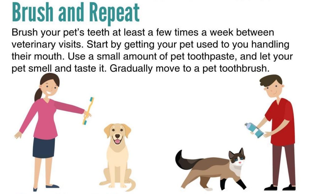 pet dental gnfp digital heidi lobprise goodnewsforpets