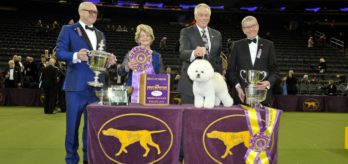 "Bichon Frise For The Win! Westminster Kennel Club Dog Show Crowns 11th ""Best in Show"" Champion In 12 Years Fueled By Purina Pro Plan"