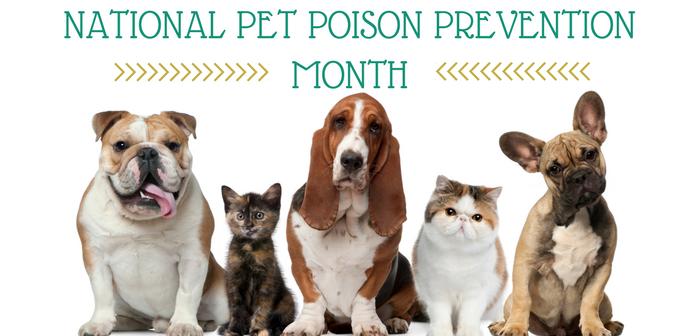 Pet Hazard Roundup for Pet Poison Prevention Month