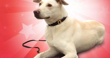 american humane hero dog awards