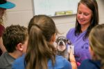 Students at Auburn University's Vet Camp Examining A Dog