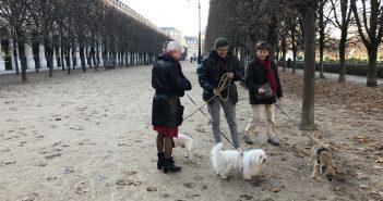 Dog WalkersofParis