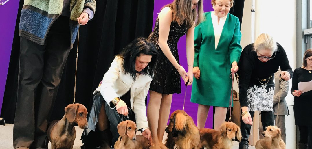 Dachschunds Welcomed With Two New Breeds at Westminster's Top of the Rock Preview