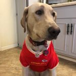 Lola in her Chiefs Shirt