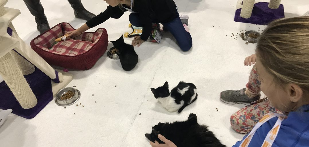 Cat Cafe Trend On the Move: Pop-ups Help Relieve Stress, Encourage More Cat Adoptions