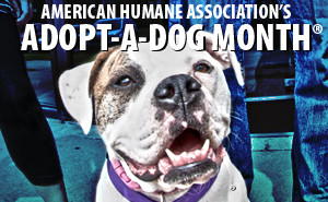 adopt a dog month