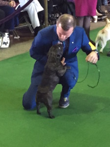 Olive with handler