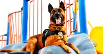 akc paw of courage