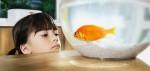 responsible fish keeping