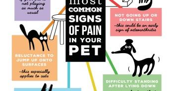 ivapm pain awareness month