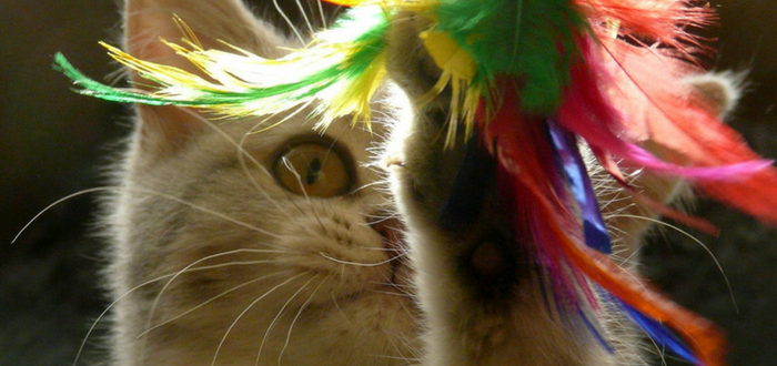 happy cat month enrichment