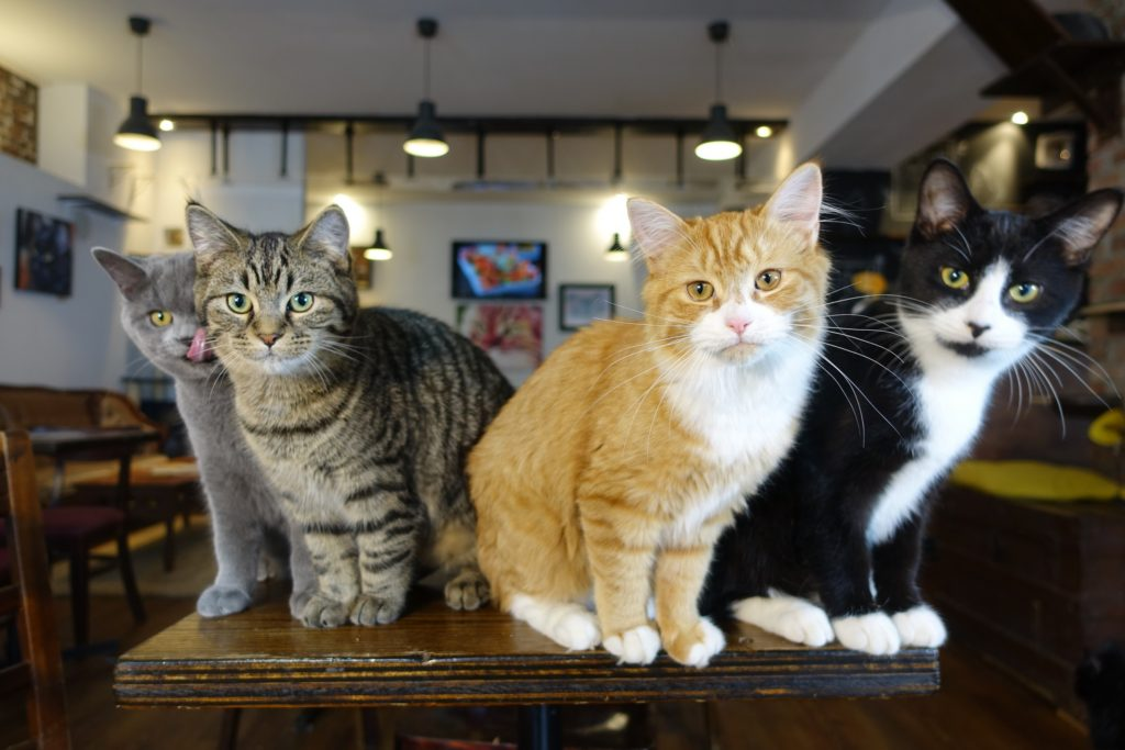 canada cat cafe