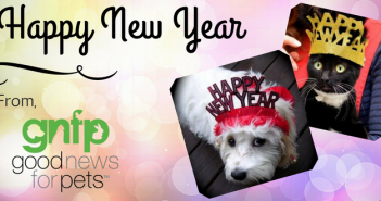 happy new year pet safety