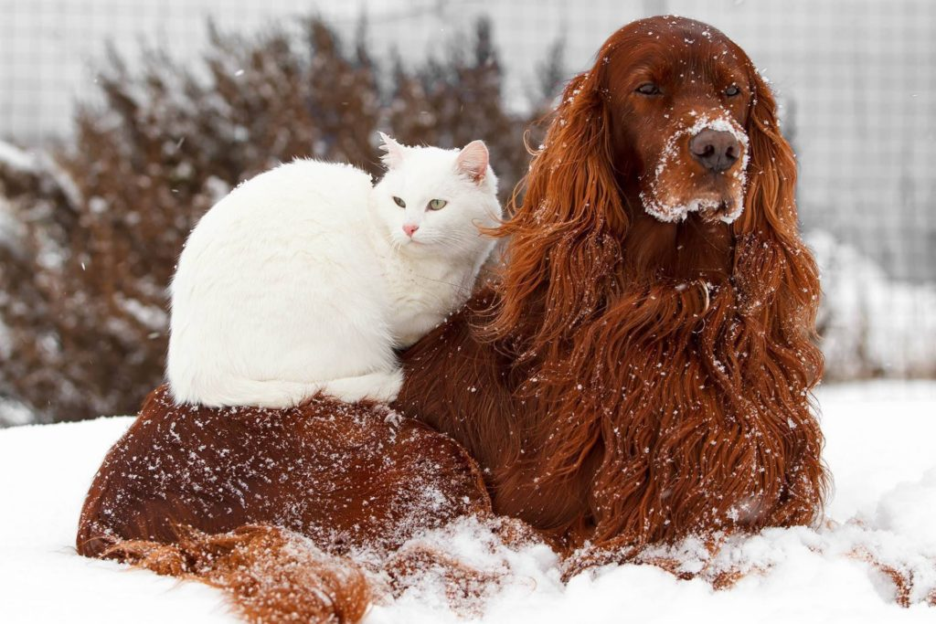 cold weather pets