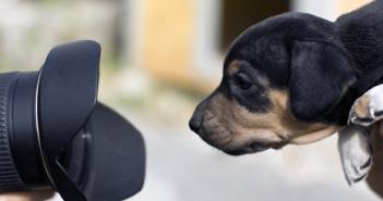 camera dog