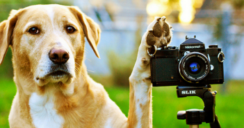 filming and photographing your dog