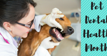 pet dental health month february