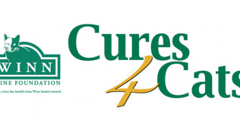 cures4cats day winn feline foundation
