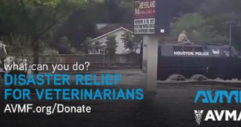 avma avmf hurricane harvey relief