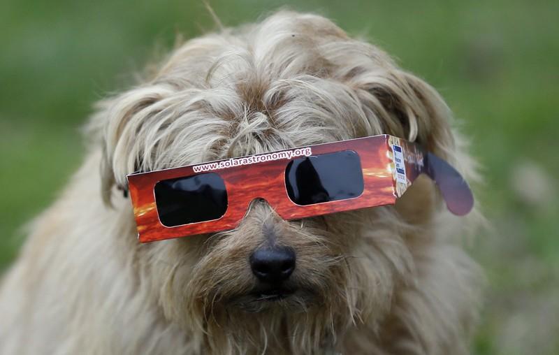eclipse pets