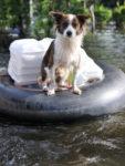 avma aid disaster emergency preparedness hurricane