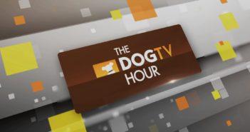 dogtv hour animal planet