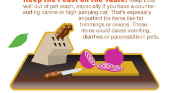 thanksgiving goodnewsforpets