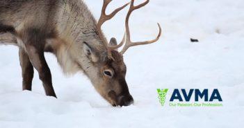 avma reindeer santa holiday e.l.v.e.s elves