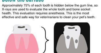 pet dental health month goodnewforpets