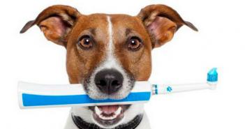 pet dental health february avma