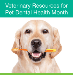 veterinary resources pet dental health month