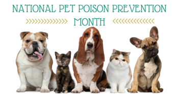 national pet poison prevention month