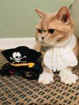 Cocoa Cat in Pirate Costume