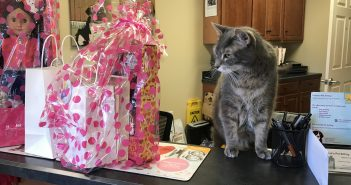 Flea Looking Over the NY Vet Winner Prizes at Butler Veterinary Hospital