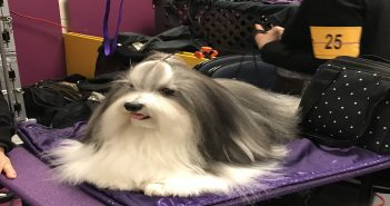 Bono Westminster Dog Show Reserve Best in Show