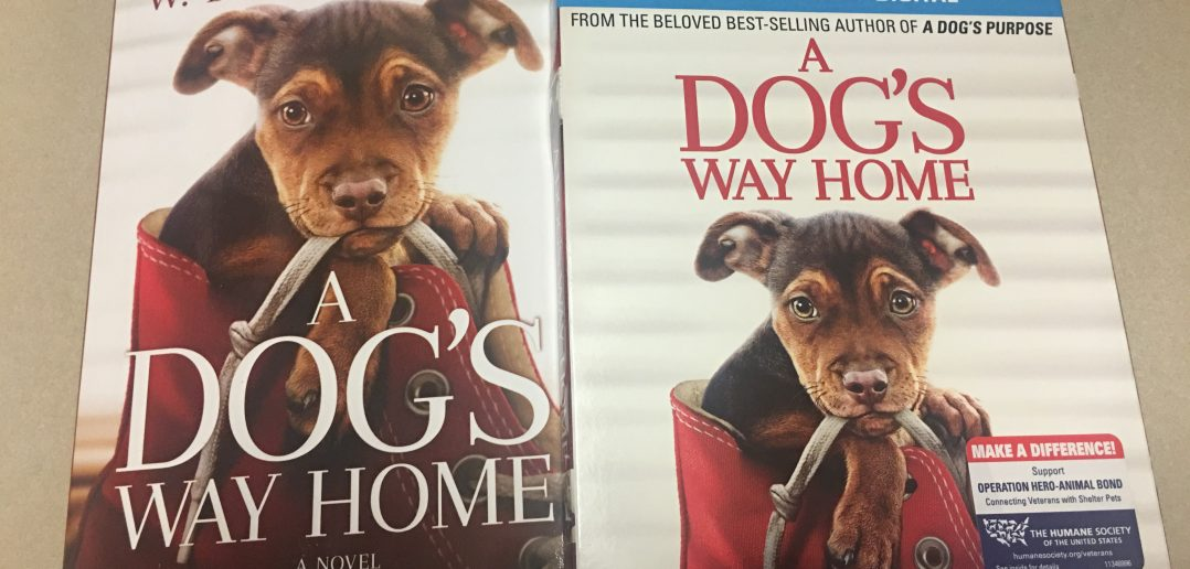 """A Dog's Way Home"" From Sony Pictures Now Available on DVD"