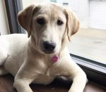 Lola, the Goodnewsforpets Lab