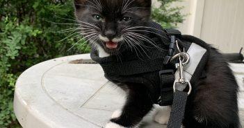 Django Cat
