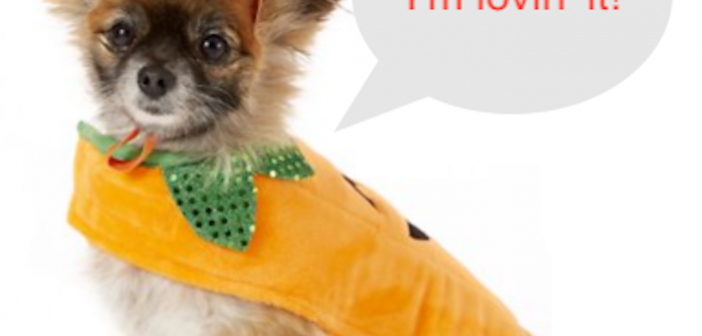 Chewy Frisco Pumpkin Small Dog and Cat Costume