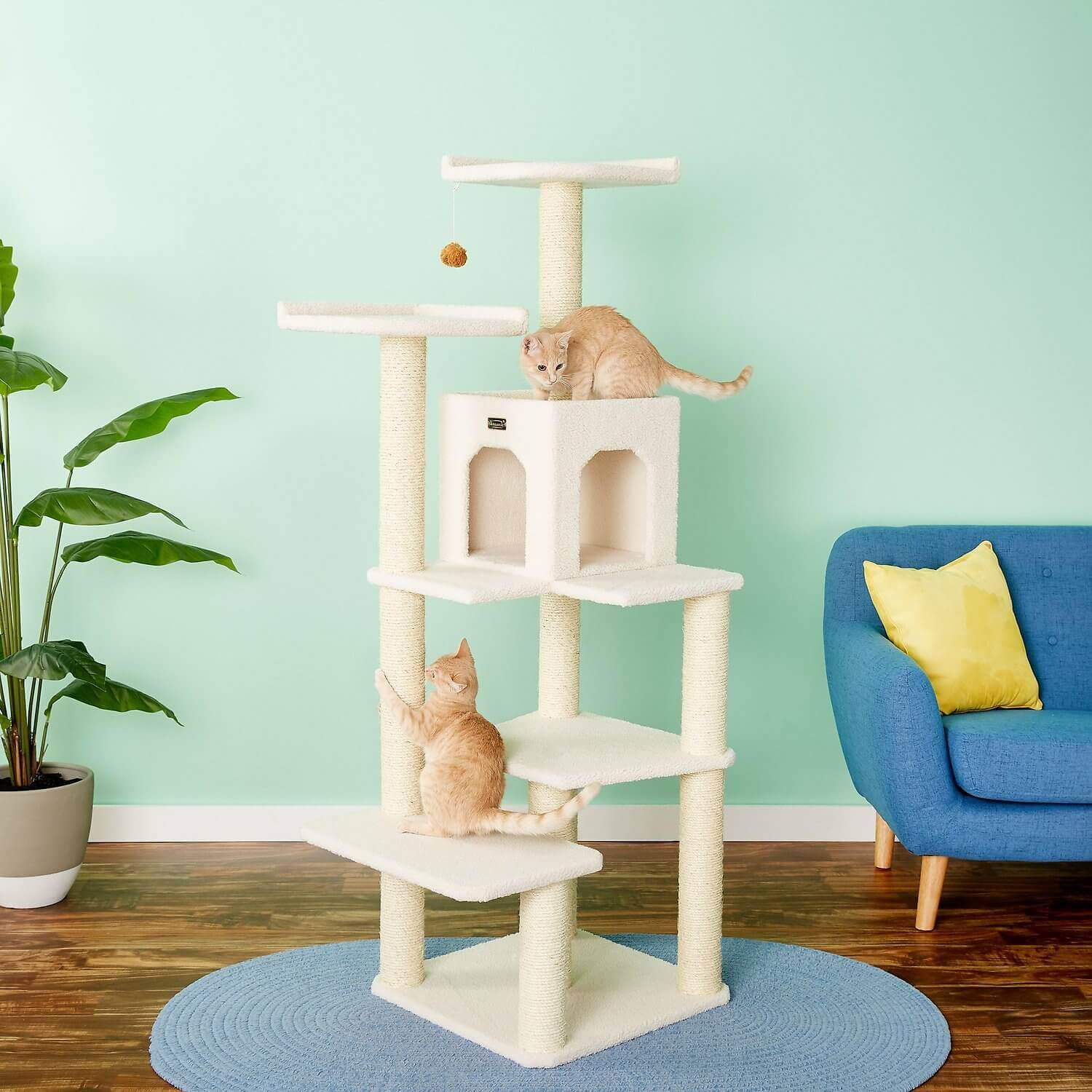 new year resolutions cat tree cat daddy